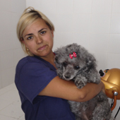 pet microchipping in Benalmádena